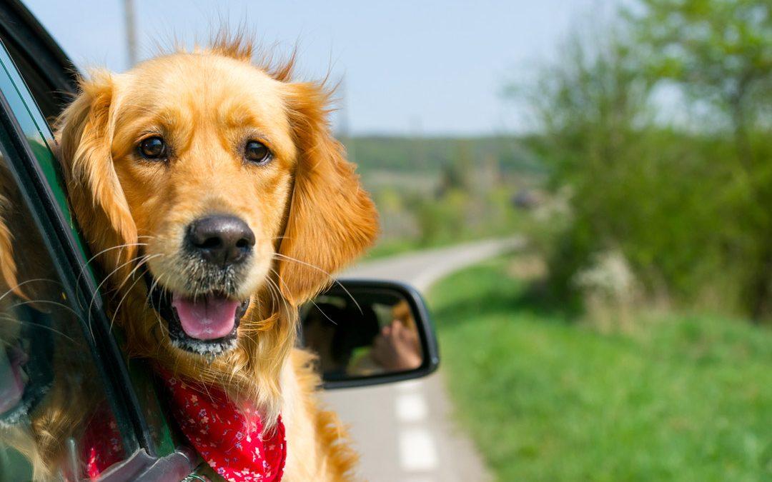 Les chiens : une opportunité pour ma maison de vacances ?