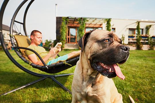 les vacanciers aiment prendre leur chien en vacances