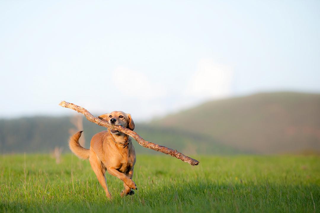 les Ardennes conviennent bien aux chiens