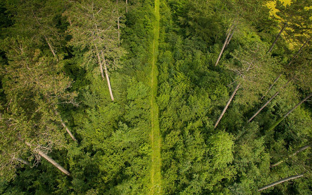 L'écotourisme : qu'est-ce que c'est?