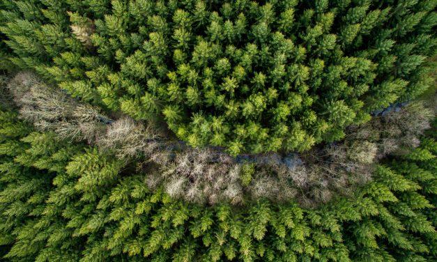 Le bain de forêt, un anti-stress naturel et gratuit
