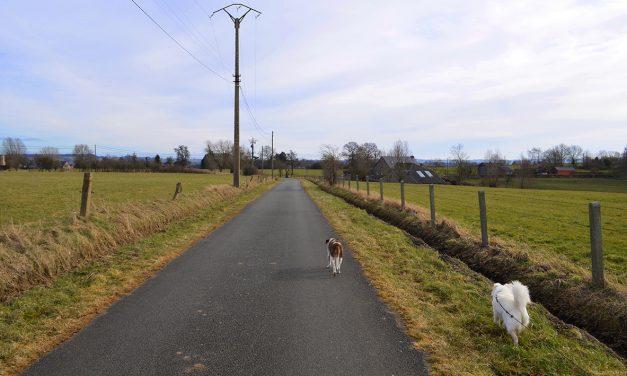 Nos chiens se promènent : balade sur le plateau de Herve