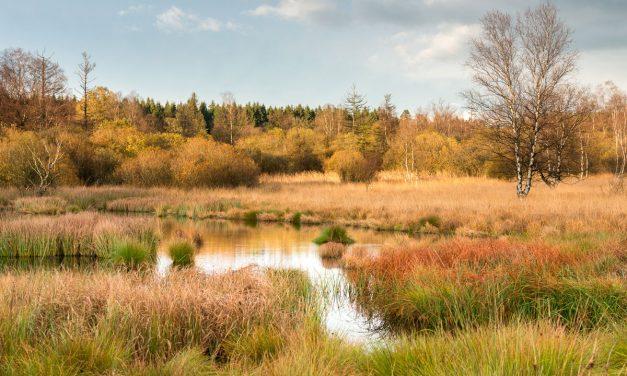 Découvrez les plus beaux endroits de l'Ardenne