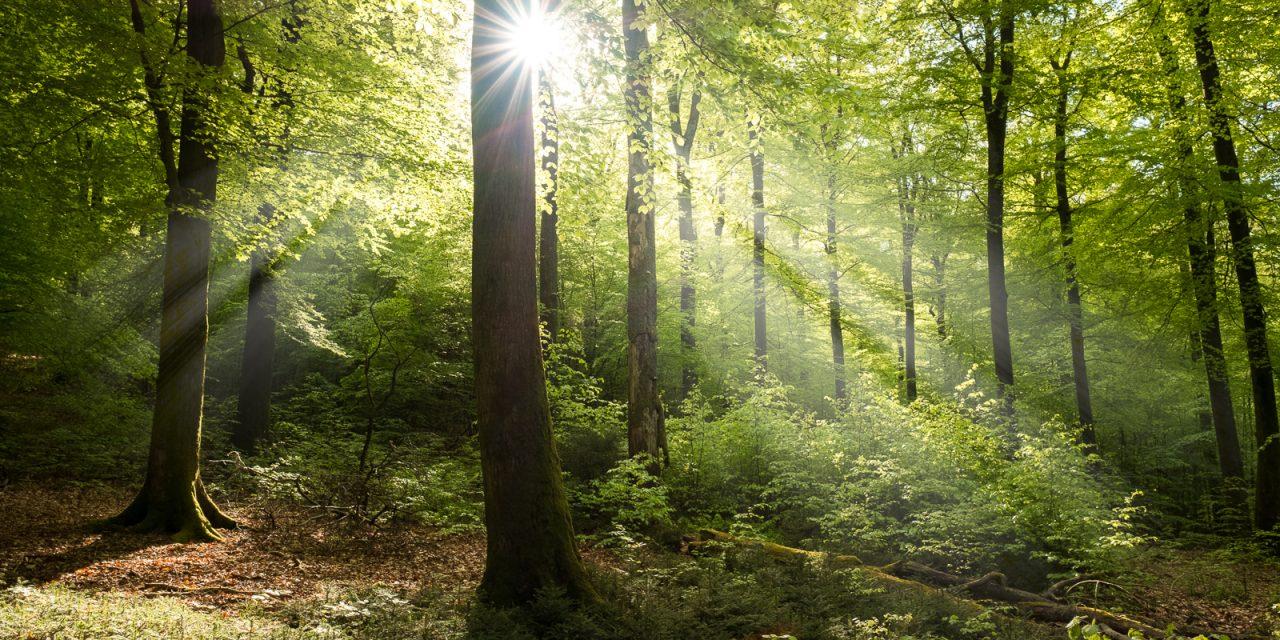 L'Ardenne au fil des saisons