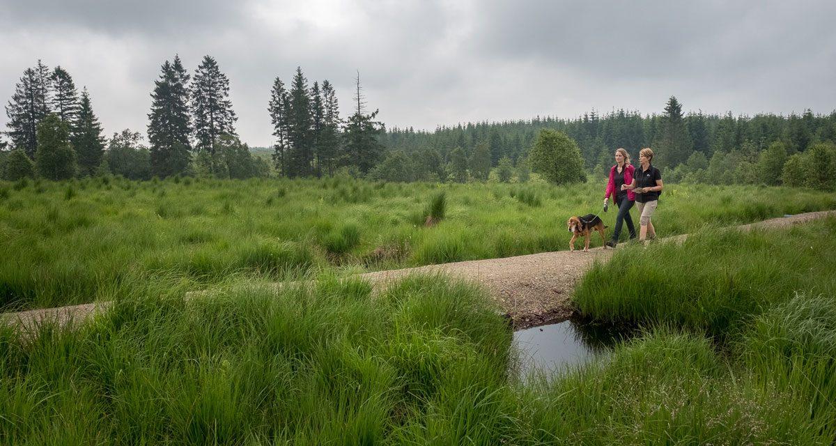 Où se promener en Hautes Fagnes avec son chien ?