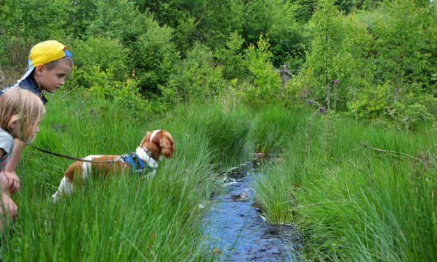 Promenade avec notre chien dans le plateau des Tailles