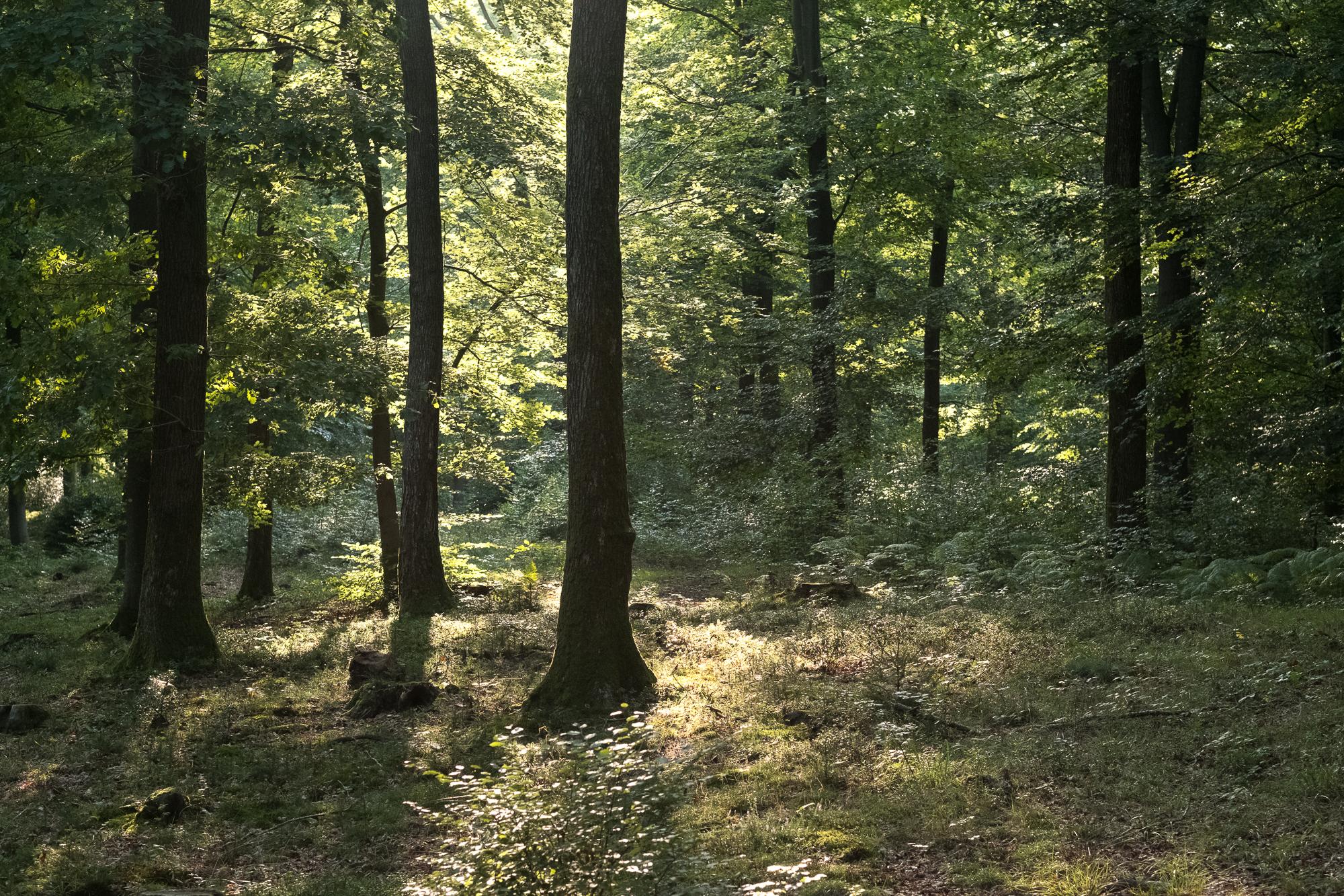 Paddenstoelen Plukken In De Ardennen Hoe Doe Je Dat Oui Go