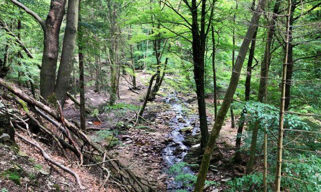 Superbe balade dans la forêt l'Hertogenwald – Hautes Fagnes