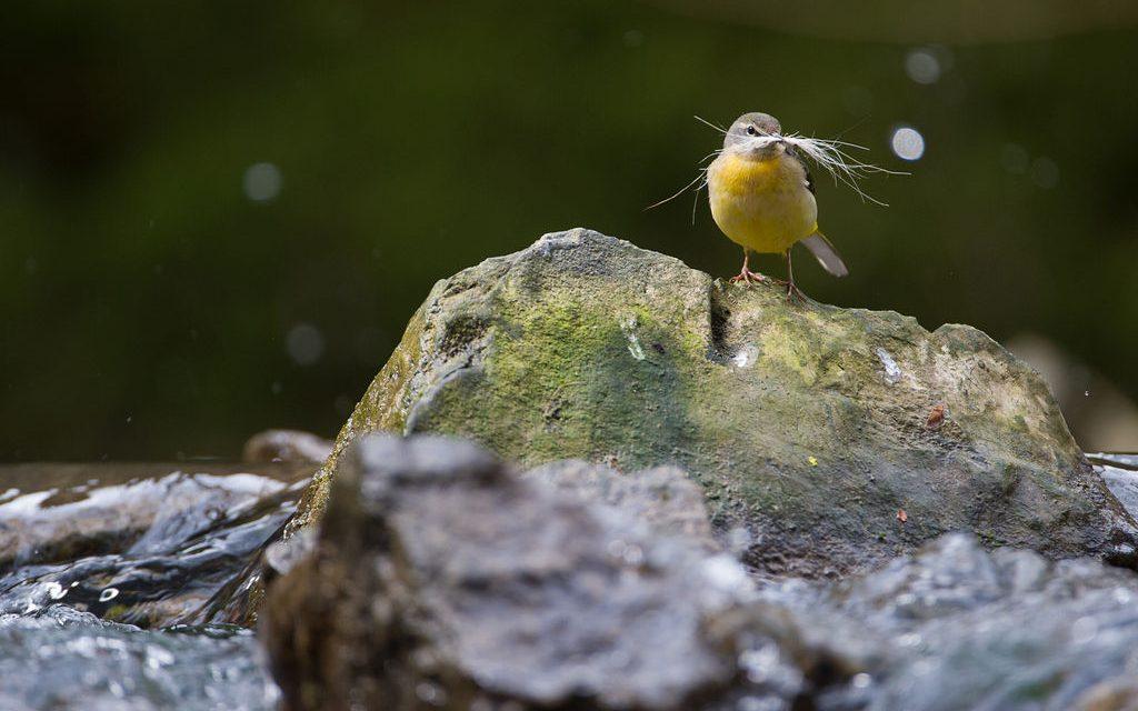 Au printemps, on observe les oiseaux en Ardenne !