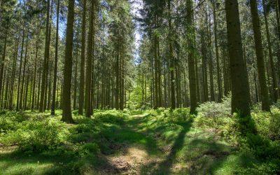 7 idées pour respecter la nature lors de votre balade en forêt d'Ardenne
