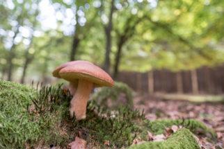 Comment partir à la découverte des champignons en Ardenne ?
