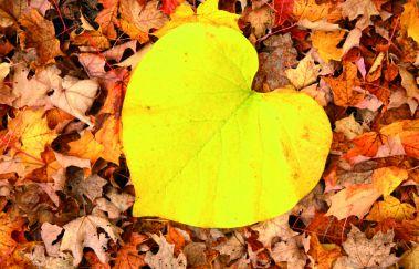 L'automne en Ardenne : 6 conseils pour profiter de cette saison colorée-Détente à