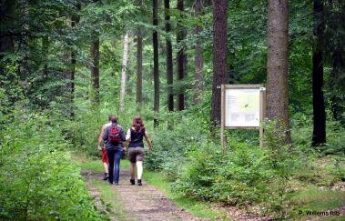 Clairière de So Bechefa-Parcours Vita à Province du Luxembourg