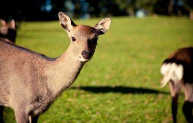 Forestia Parc animalier-Parcs-animaliers à Province de Liège