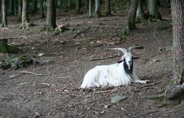 Parc à Gibier de La Roche-en-Ardenne-Parcs-animaliers à La Roche en Ardenne - Province du Luxembourg
