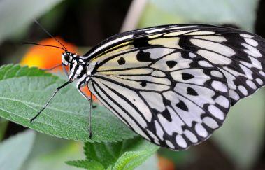 La Grange aux Papillons-Parcs et jardins à Province de Hainaut