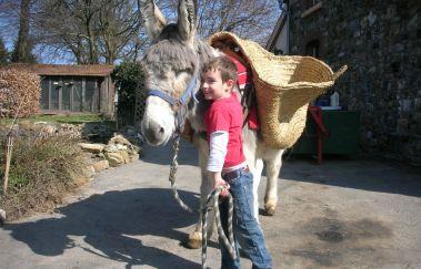 Ânes-OK-Promenades âne-cheval-attelage à Province de Liège